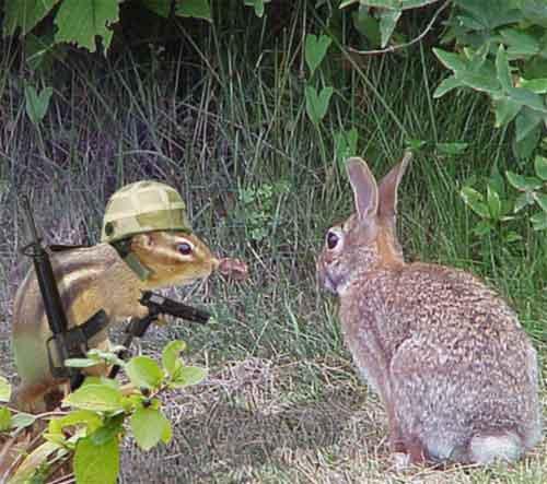 прикольные картинки кроликов: