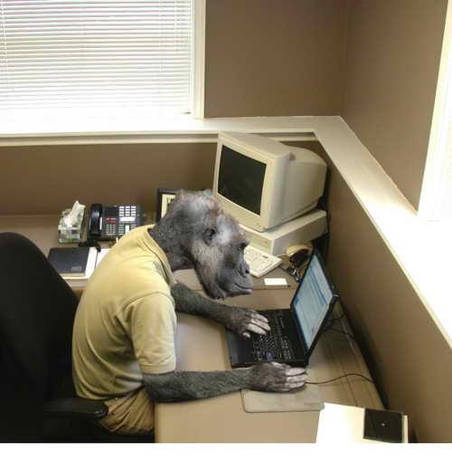 http://funny-animals-2007.narod.ru/img/654612624.jpg