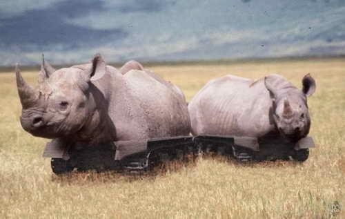 Кибер секс носорог